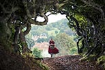 Foto Into the Woods 2